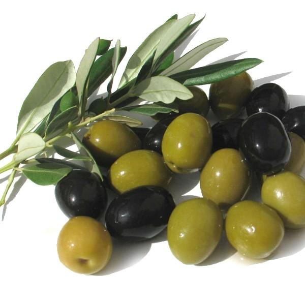 vagio agrofarms halkidiki olives